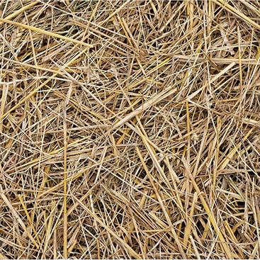 Jumbo-salt-hay