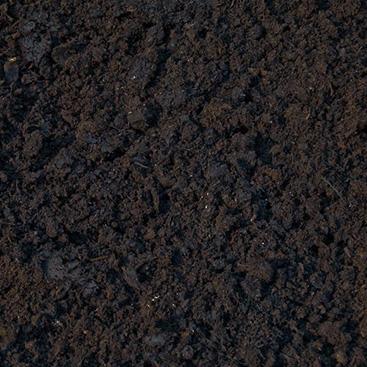 Mushroom-Soil